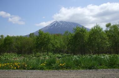 【ニセコ】虻田郡ニセコ町字豊里176番150