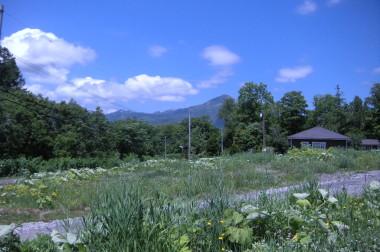 【ニセコ】虻田郡ニセコ町字里見11番30